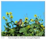 Bird amongst the wildflowers