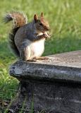 Squirrel on a tomb