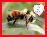 Bee my Valentine!