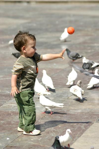 Pigeon Feeding*