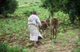 Voyage au Maroc - Paysan labourant son champ pieds nus