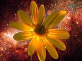 Space Daisy