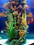 Aquarium in Hotel