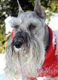 Mitzi: Wonder Dog