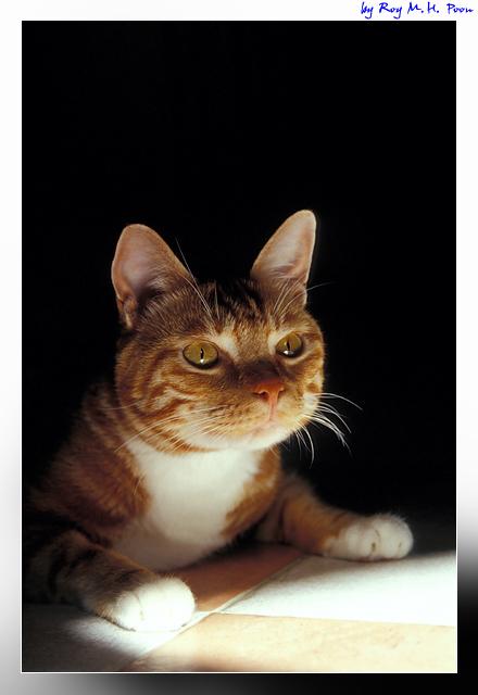 My Cat: Siufu