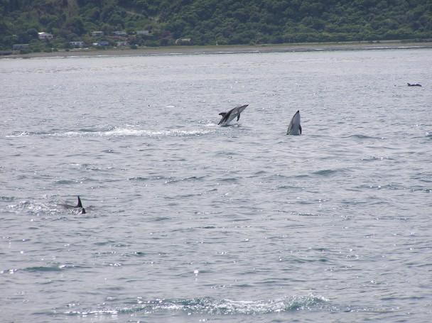 Dolphins 3.jpg