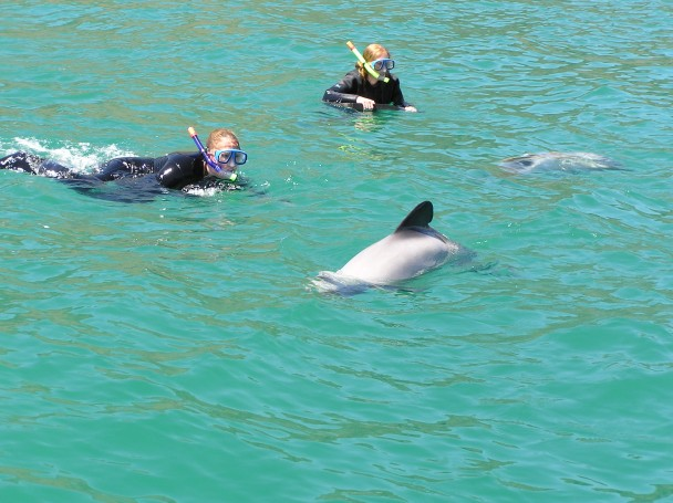Hector Dolphins 7.jpg