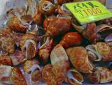 Shells red