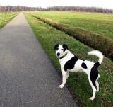Joop's Dog Log - Wednesday Apr 07