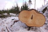 Destroyed-forest.jpg