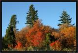 fall_2004