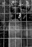 Monument Graffiti