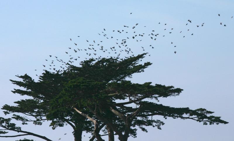 018_Many birds above tree_8557`0501311344.JPG