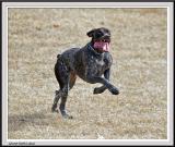 Dog Tongue Flapping - IMG_1866.jpg