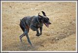 Dog Leaping - IMG_1867.jpg