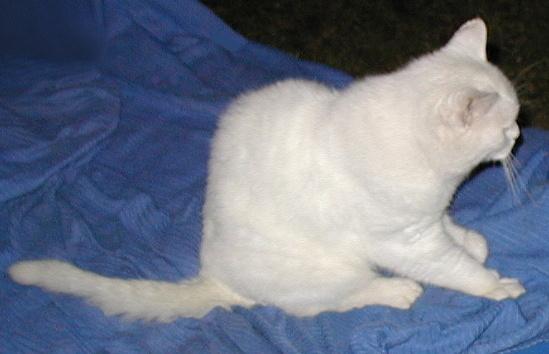Green Eyes...a sweet little kitty!