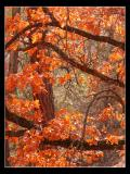 Fall?