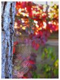 shiney web
