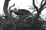 Eagles 2004