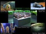 Aquarium Party Niigata - Japan - 2004