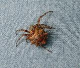 Spider on Pant Leg