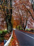Poetry Road ...