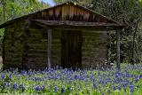 Cabin in the Bluebonnets
