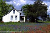 Little House on the Bluebonnets