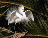 Regular Birding Spots
