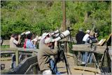 Photographers at the Rookery