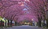 Pink-Avenue_1280.jpg