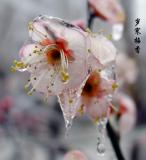 frozen_flower