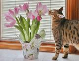 Wake Up and Smell the Tulips