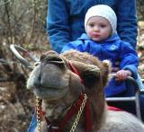 Sorry to all about not keeping up to date! I will try on get you some after shots of my palate later this week. I usually don't open my mouth for Pops anymore when he wants me to. Only open for lots of food. Here is a shot of me on a camel at the Bronx zoo! More later.