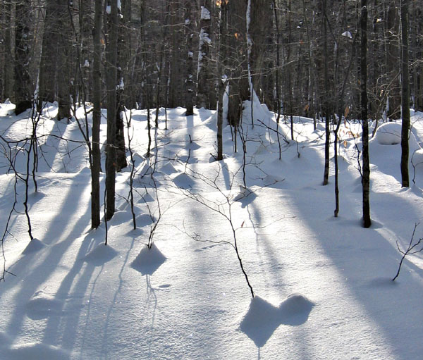 snow_trees2_ps_crop1_4w.jpg