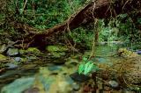 jungle's hurt - Mata Atlântica do PETAR, Iporanga-SP