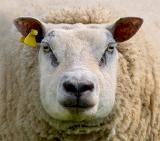Who are ewe calling a square ?