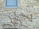 A window in Northwestern campus