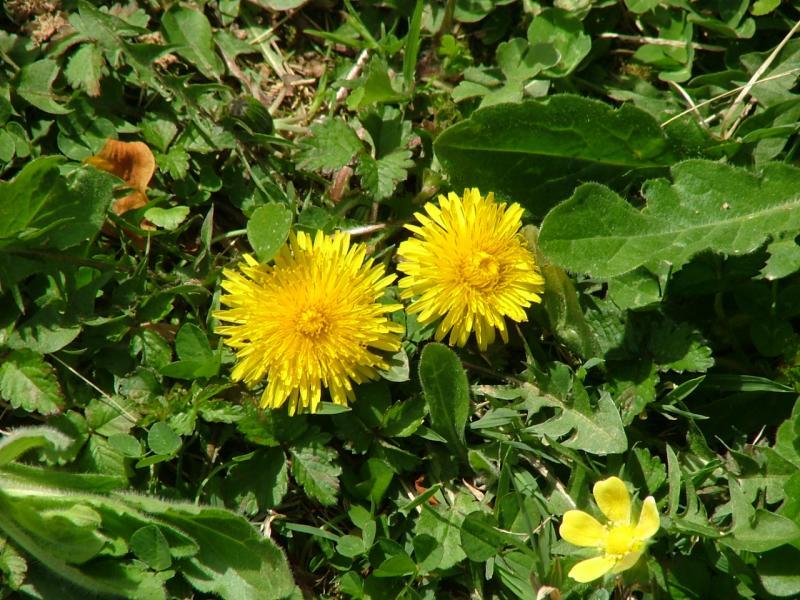Spring 2004