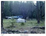 Our campsite at the Wawona Campgrounds