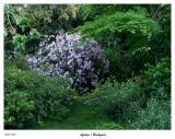 Azaleas from the yard