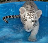 3-mo-Lily-in-pool.jpg