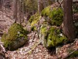 mossy-rocks1.jpg