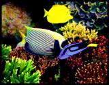 fish01rf_138.jpg