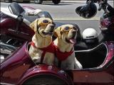 With their Doggles on