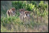 Three Brothers out for a hunt