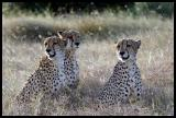 Three Brothers looking for prey