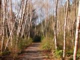 Quatse River trail