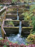 Fish Ladder, Tumwater Falls Park