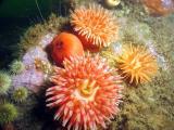 Look!!  More anemones!!!